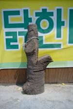 GHarhoff_Seoul-24 thumbnail