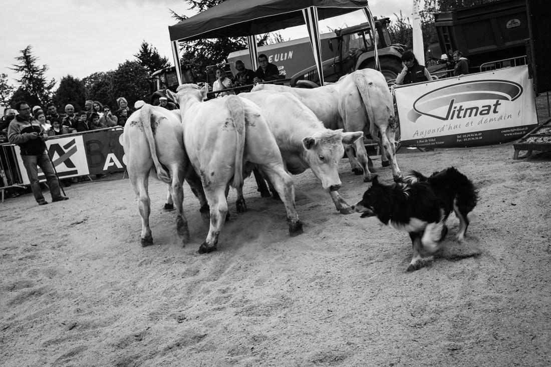 Ouest génétique agriculture Gabriel Loisy photojournalisme reportage Épinal Vosges