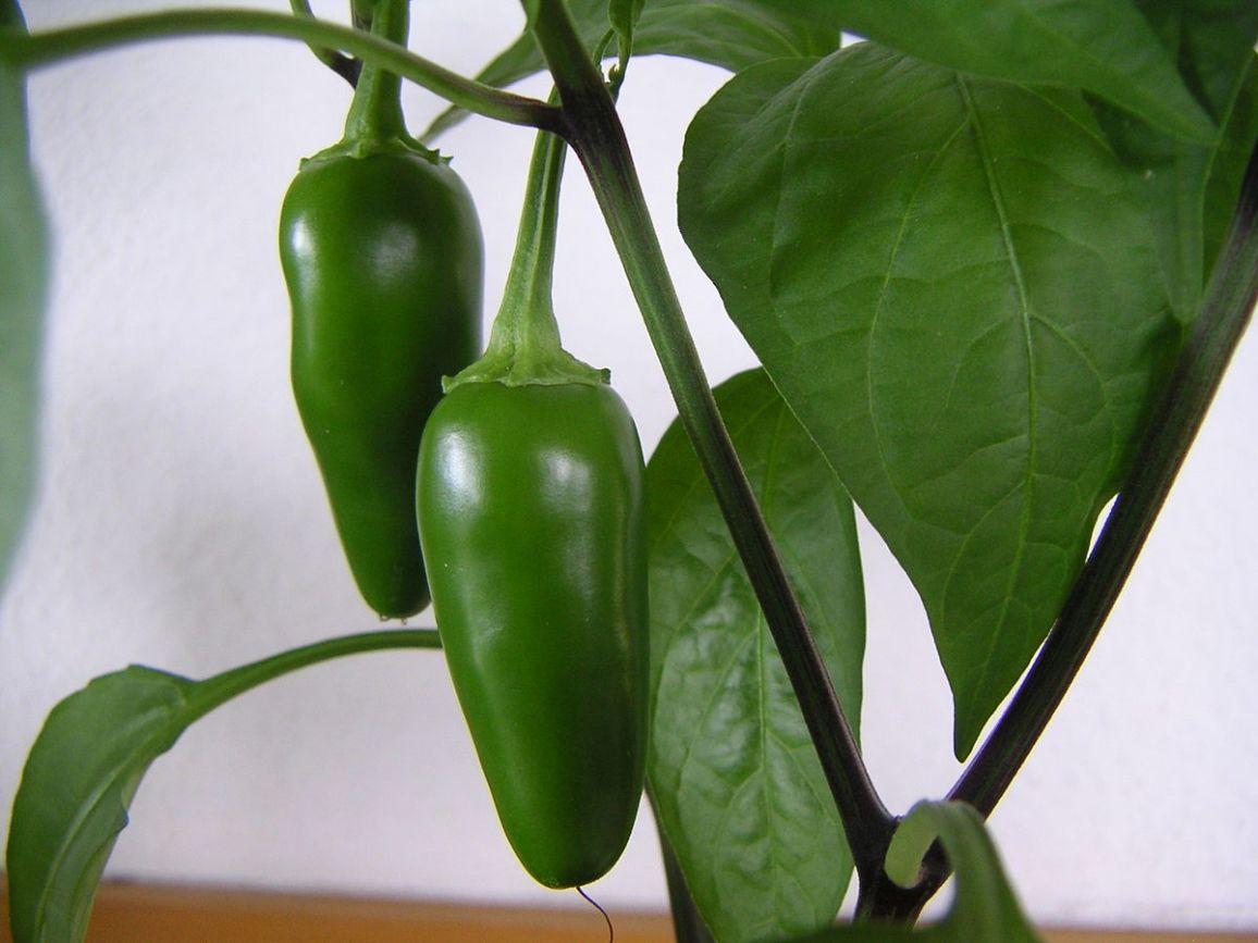 Pepper Hot 4