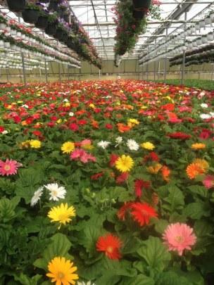 Greenhouses 1