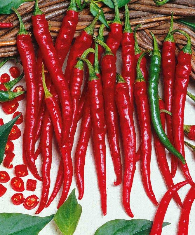 Pepper Hot 1