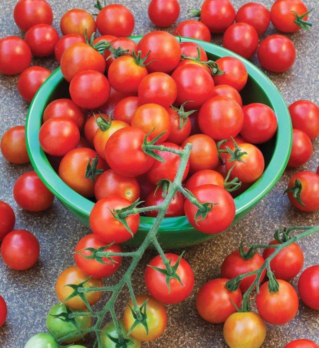 Tomato Cherry 1