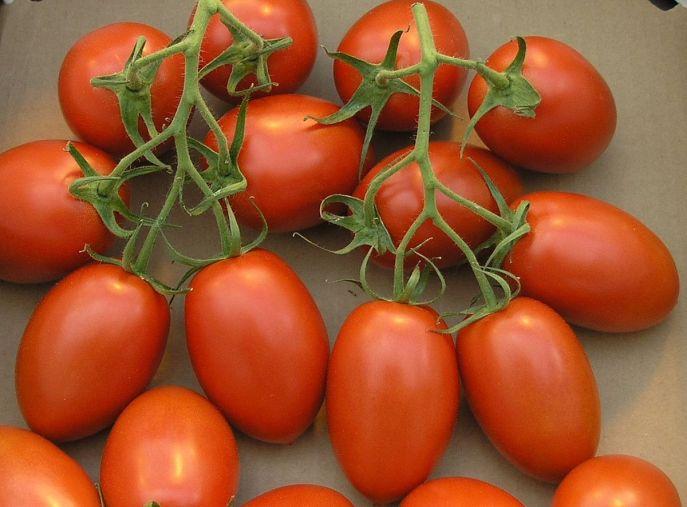 Tomato Roma 1