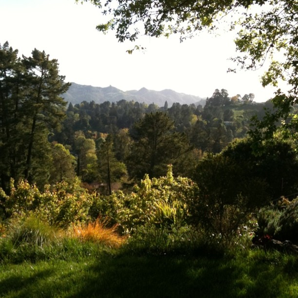 Beautiful Orinda hills