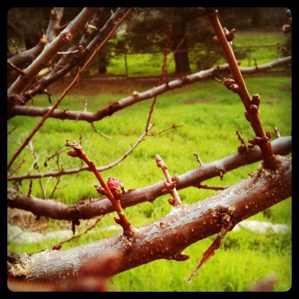 Pruning the fruit trees
