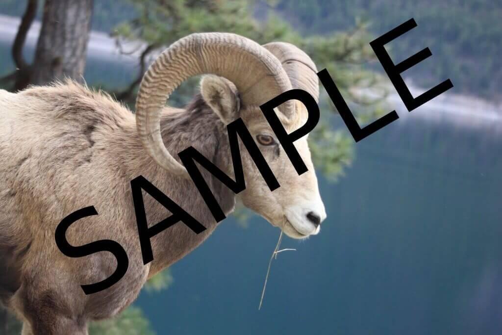 Care e cel mai simplu mod de a pune watermark pe o poza