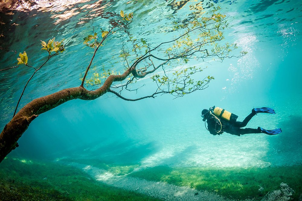 3 Third Place Diver in Magic Kingdom