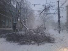 Copac cazut Galati