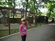 Sara la Zoo Braila Romania 14