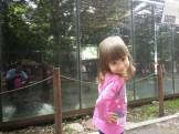 Sara la Zoo Braila Romania 18