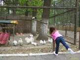 Sara la Zoo Braila Romania 24