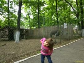 Sara la Zoo Braila Romania 26