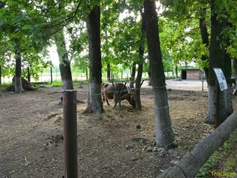 Sara la Zoo Braila Romania 35