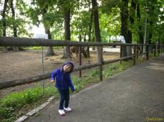 Sara la Zoo Braila Romania 36