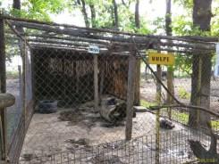 Sara la Zoo Braila Romania 38