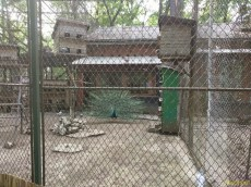 Sara la Zoo Braila Romania 4