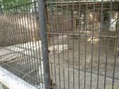 Sara la Zoo Braila Romania 43