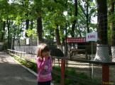 Sara la Zoo Braila Romania 8