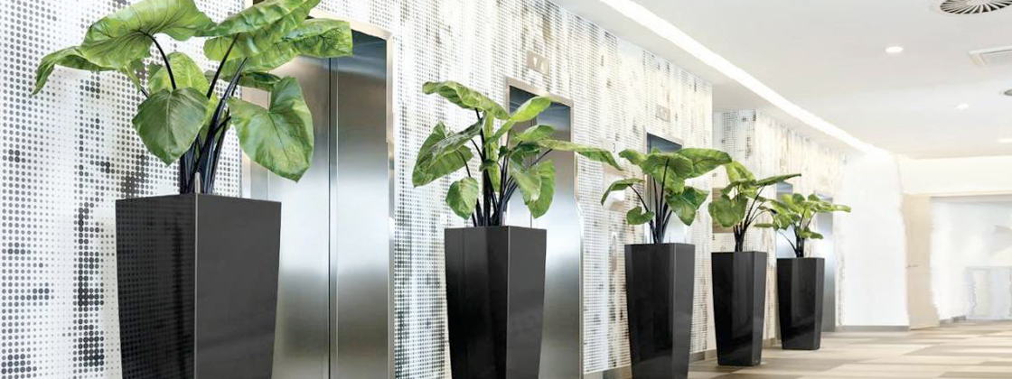Indoor Plant Hire  Office Plants  Indoor Plants Online