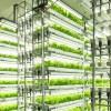 植物工場を新たな柱に 電機大手が相次ぎスマートアグリ参入