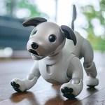 ソニーの犬型ロボット「aibo」出荷台数が2万台を突破