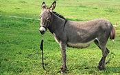 donkey_trekking