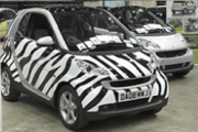 Smart Fotwo - The Zebra - Lovely