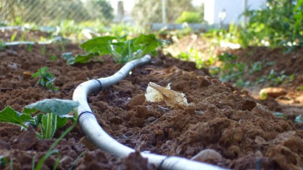 Irrigazione a goccia: errori da non fare