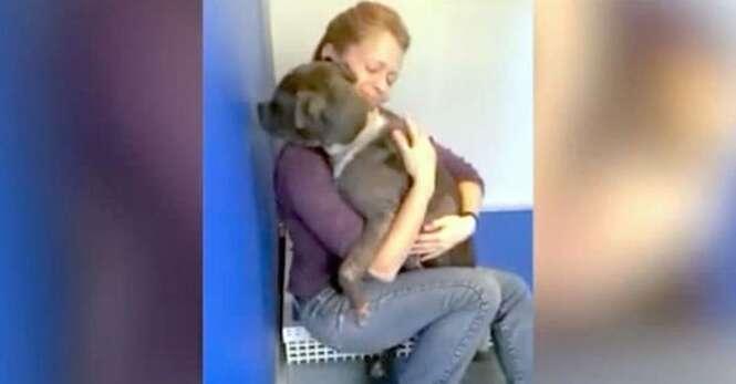 Foto: Go Rescue Pet Adoption Center