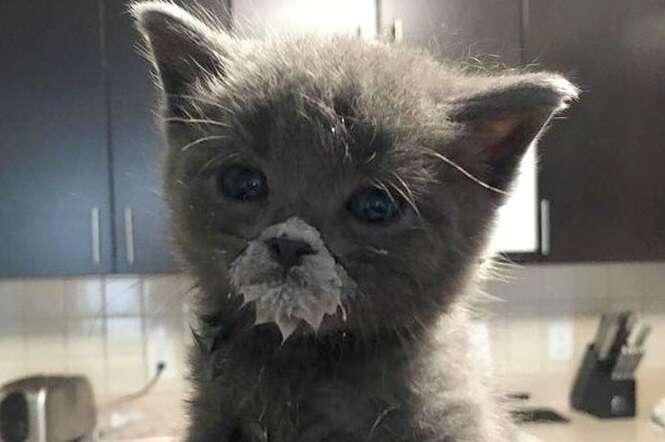 Cute Siamese Kittens Wallpaper 10 Gatinhos T 227 O Fofos Que Voc 234 N 227 O Vai Saber Qual Gostaria