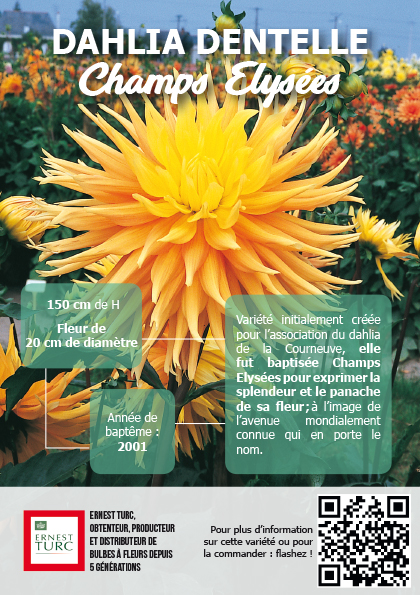 Panneau dahlia - Terra Botanica