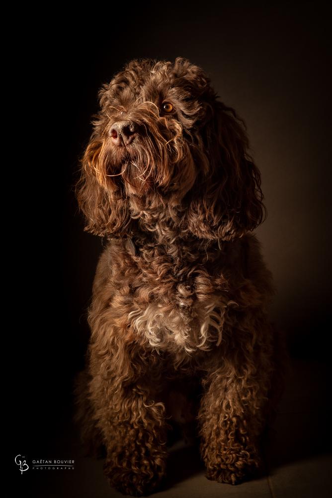 Portrait-animal-Photogrpahe-Mâcon-Cluny-Tournus