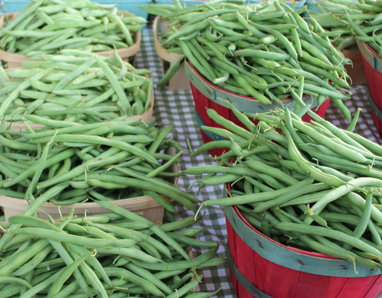 green beans at festival blairsville georgia