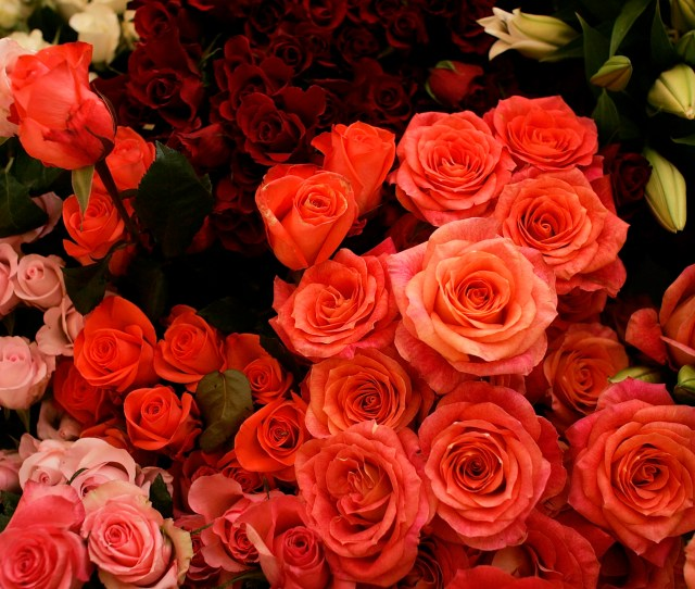 Valentines Day Boosts Demand For Fresh Flowers