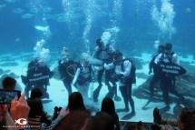 Scuba Georgia Aquarium Wedding