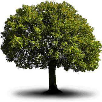 albero_3