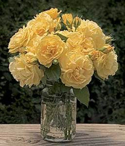 Julia Child Floribunda Rose Bouquet in Vase