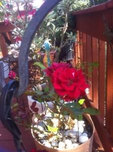 Valeria, Miniature Potted Rose