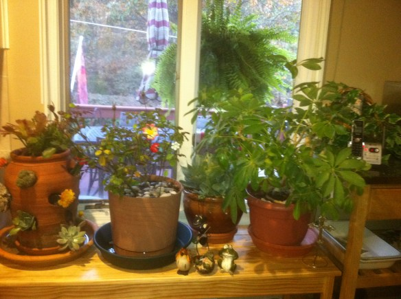 Plant Table Constructed by Big Daddy, Gaga's Garden