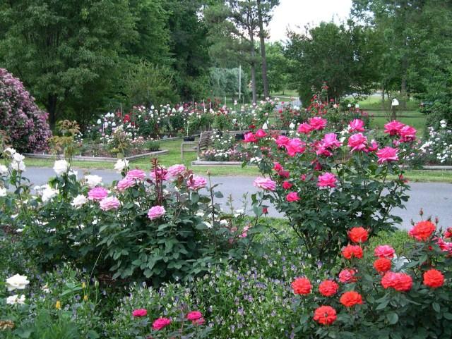Clemons Rose Garden