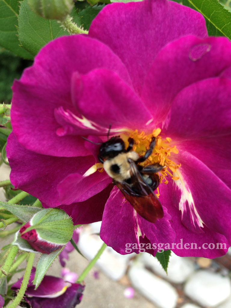 Stormy Weather, LCI with a Pollinator | Its All About Relationships