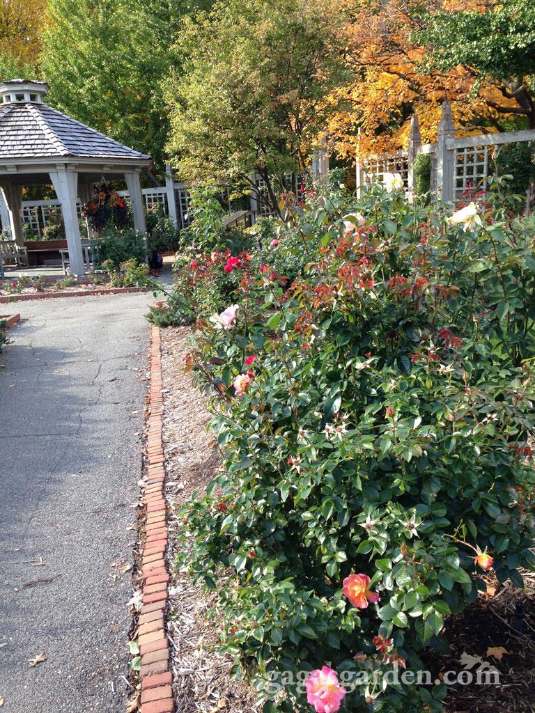 University of Minnesota Landscape Arboretum Rose Garden
