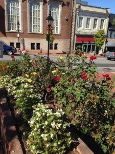 Town Hall Rose Garden in Fredericksburg, VA