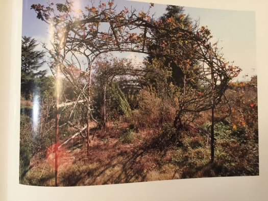 The Archway of The Futaba Rose Garden After the Nuclear Disaster