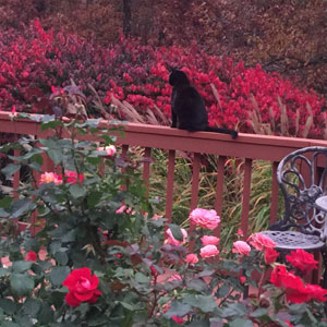 Squeaks Enjoying The Rose Garden
