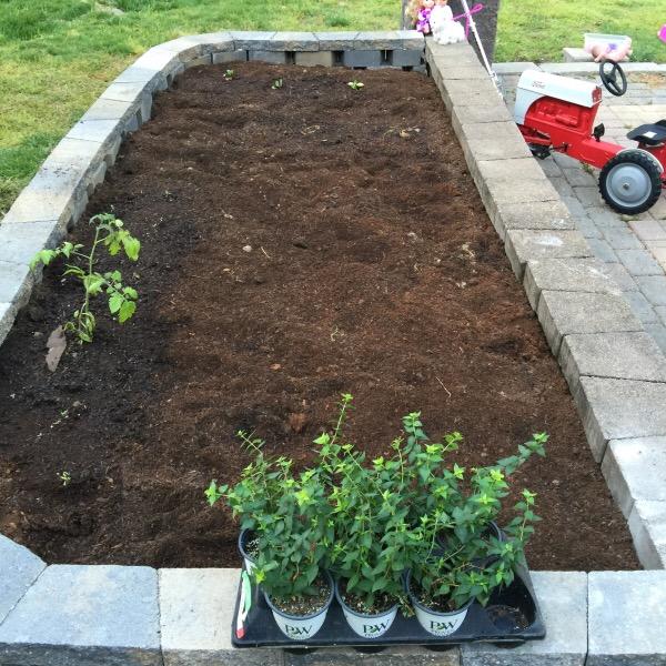 The Raised Kids Garden