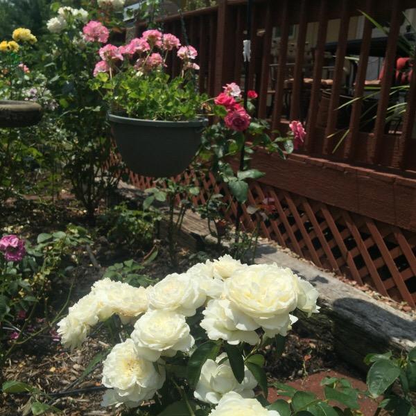 'Bolero' In The Illinois Garden Setting