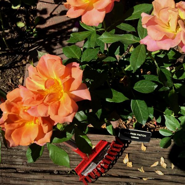 Corona Rake to rake up debris around 'Pumpkin Patch'