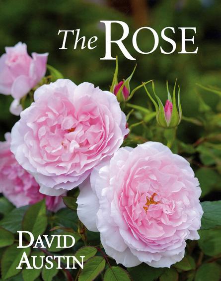 'The ROSE' by David Austin