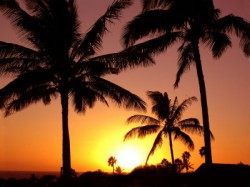 palm trees with setting sun